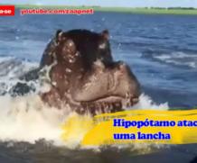 Hipopótamo ataca lancha de Safari na Zâmbia