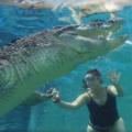 Mergulhe com os Crocodilos e fique cara a cara com o maior réptil do mundo
