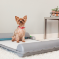Este sanitário para PET vai facilitar a sua vida!